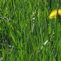 La tête dans l'azur et les pieds dans la verdure