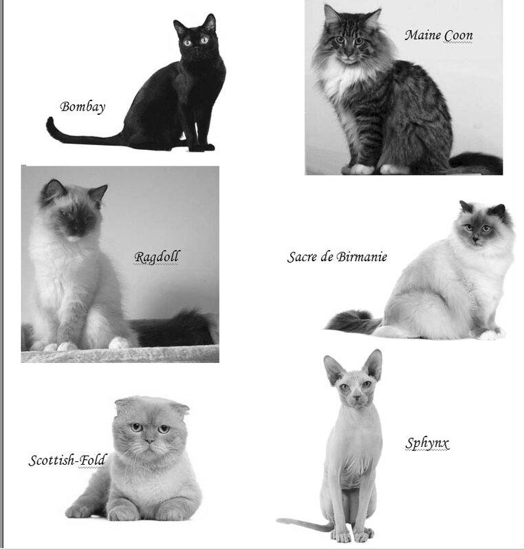 chats salon