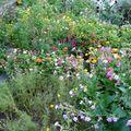 2009 09 03 Une partie de mon jardin