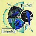 3ème page oiseaux