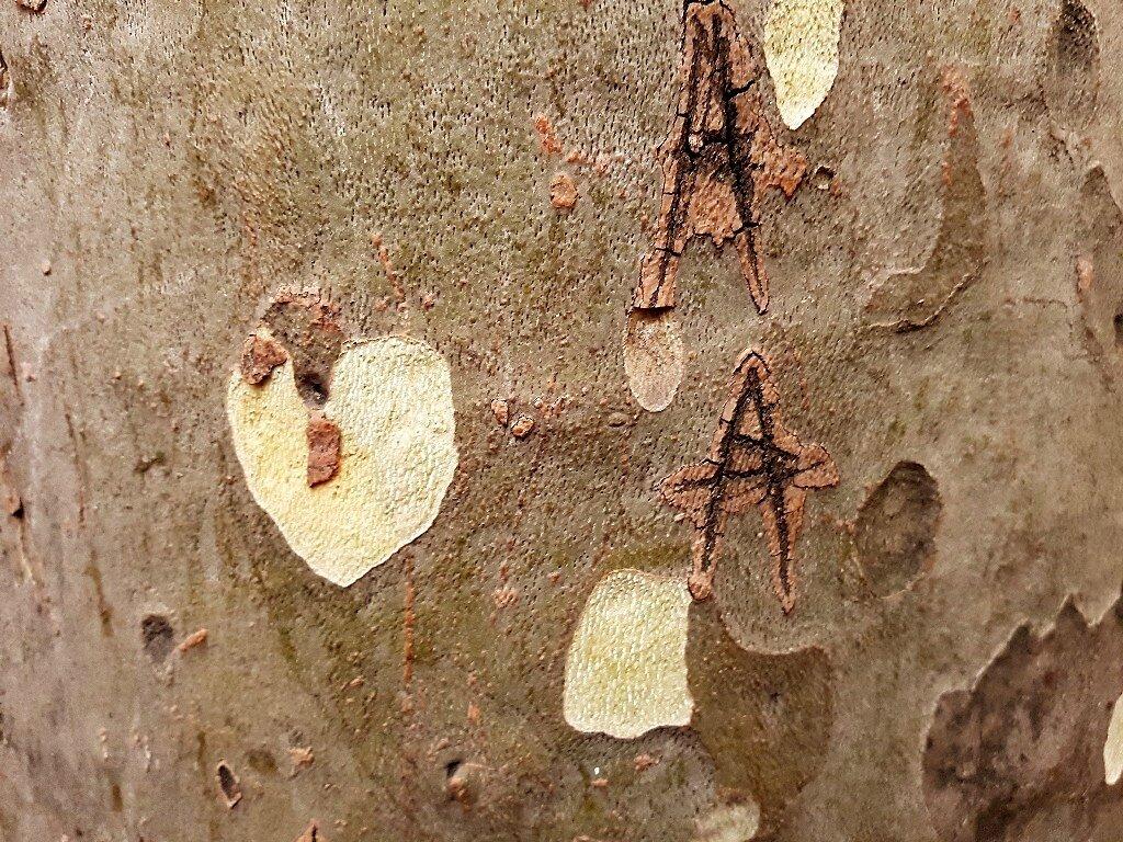Coeur A arbre_200927