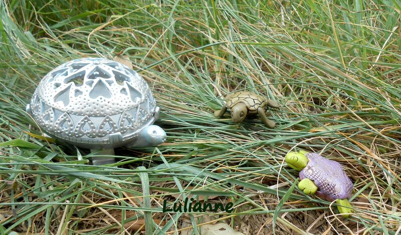 lulianne-tortue-3
