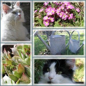 les_chats_dans_le_jardin
