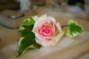 rose_halo