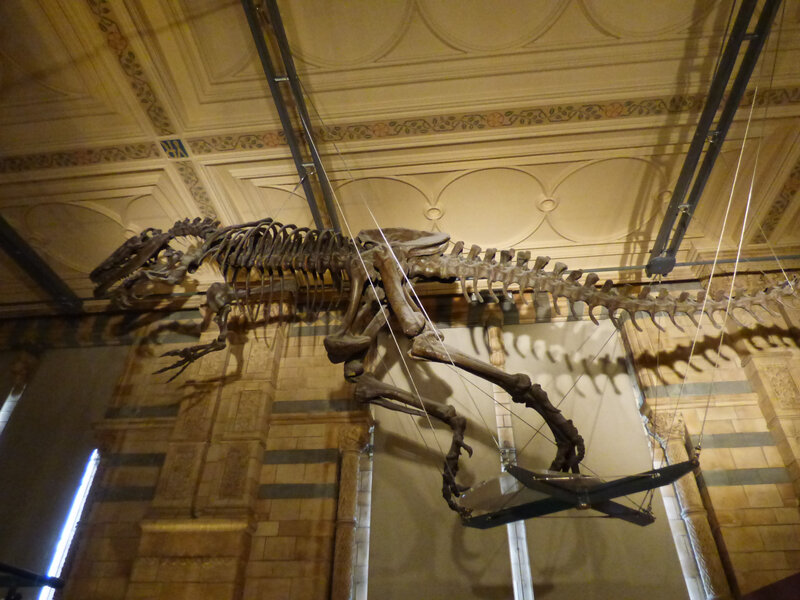 25 Londres Natural History Museum (51)