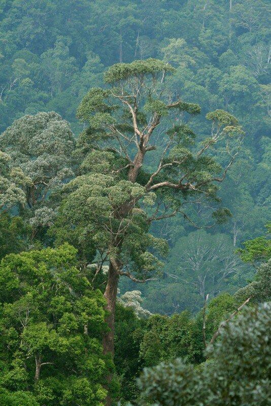 Vue de Warisan Hill2_Taman Negara_XRu