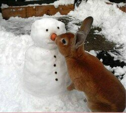snowman_rabbit_big