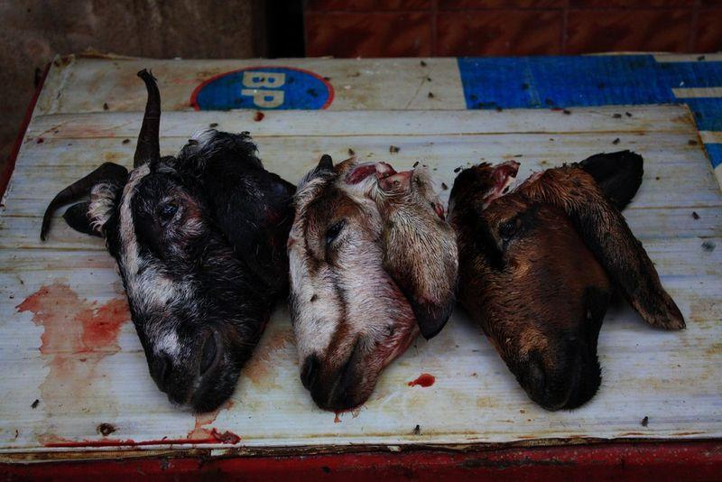 Têtes de chèvre sur un marché de Pondy