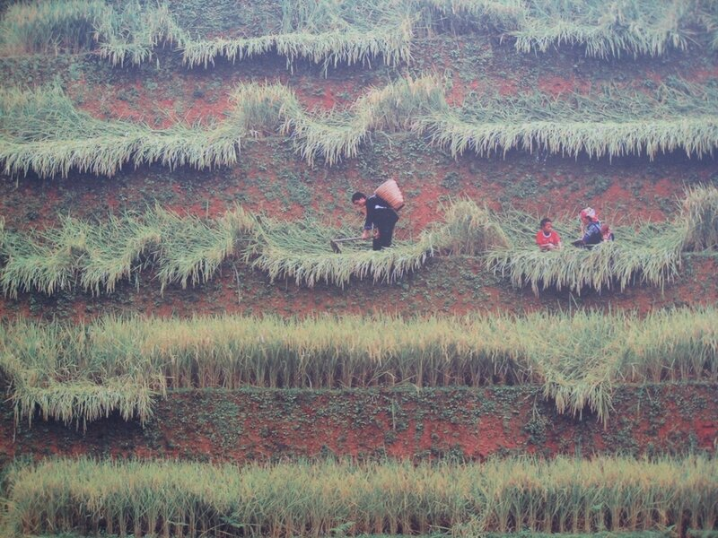 images du Vietnam