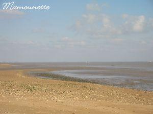 Moules_au_bleu_et_piment_de_la_p_che___pieds___l_Aiguillon_mer_004