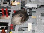 LegoOasis5