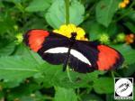 Jardin des papillons Hunawihr 07