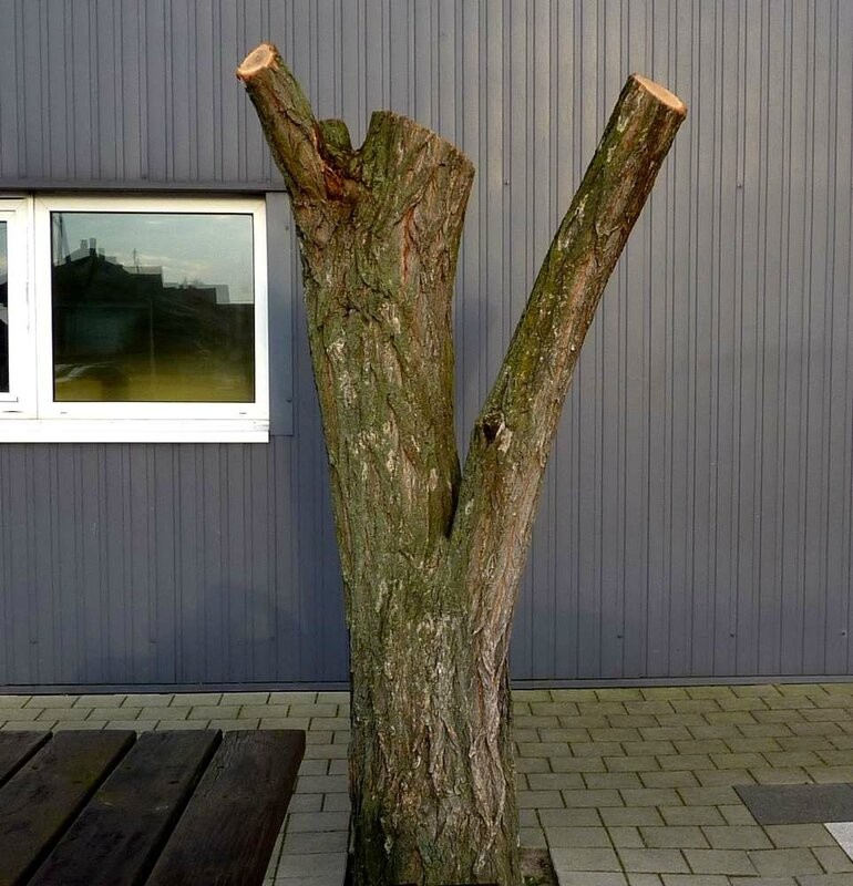 arbre à chocolat 2