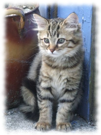 chatons-france-1172454870-1387275[1]