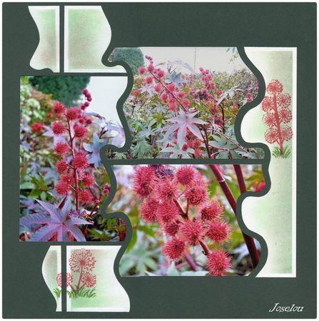 Fleurs à Terrabotanica