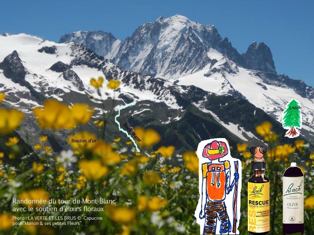 Randonnée sur le Tour du Mont Blanc / Témoignage de Capucine / EF : Rescue, Olive, Hornbeam, Larch, Rock Water, Bouton d'or