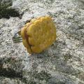 Un biscuit se dore au soleil...