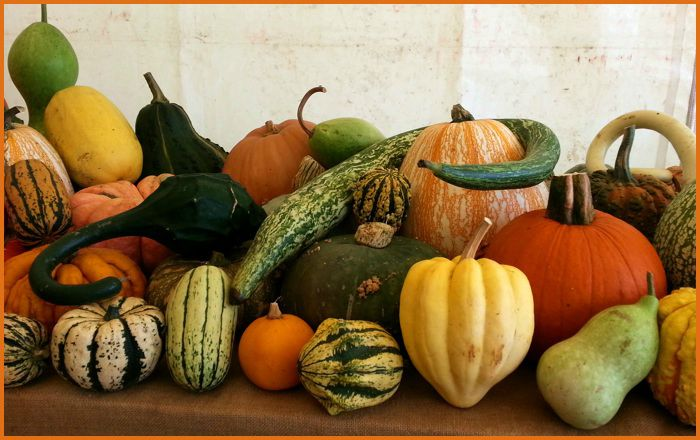 courge4