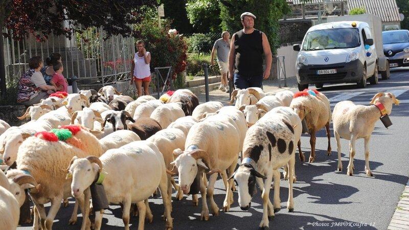 Photos JMP©Koufra 12 - Le Caylar Mouton Transhumance - 20062018 - 076