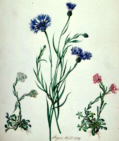 bleu (5)