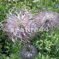 230_sentier botanique