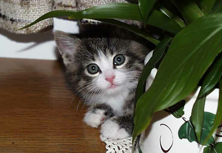 Young_cat