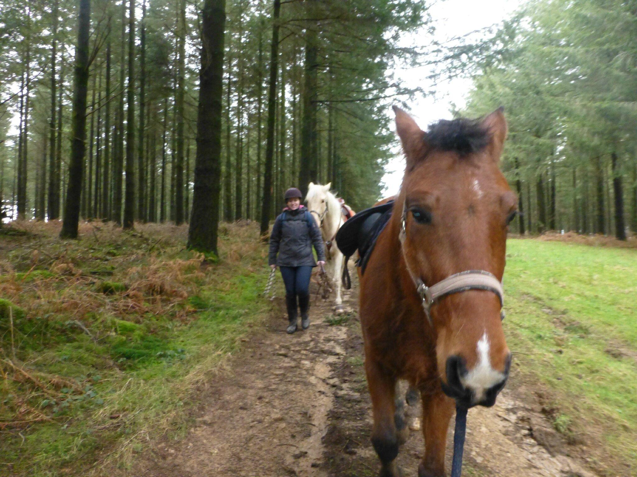 Balade à cheval dans la forêt P1080225