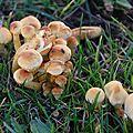 19-11-11 La famille champignon