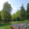 Cyprès chauve • Taxodium distichum • Famille des Taxodiaceae