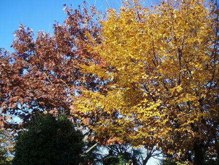 NOVEMBRE_2008_003