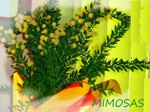 MIMOSAS gp mars 2013 GP