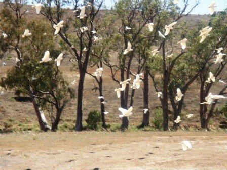 Australie Faune Flore Paysages - janvier 2005 (39)