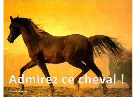 cheval_et_word_art