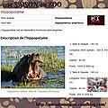 Animaux : hippopotame.