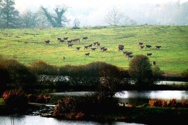 troupeau les étangs domaine