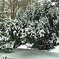 Arbres sous la neige