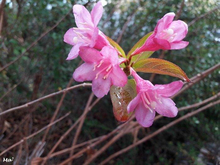 180116_fleurs_Valence