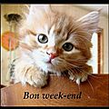 Bon week end les ch'amies