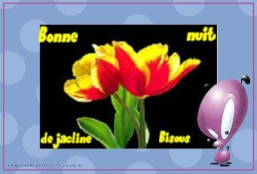 b_nuit_tulipe_rge_jne_170_