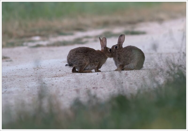 plaine lapins calins 6 110715