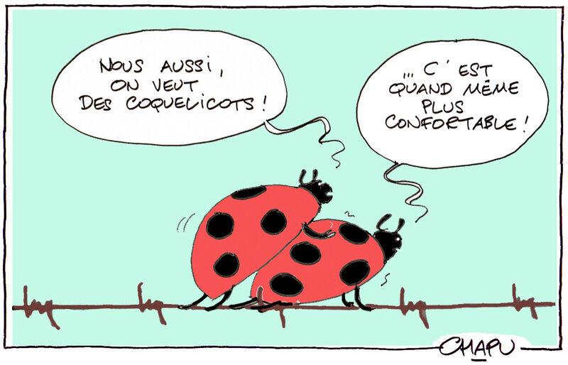 29-Coquelicots