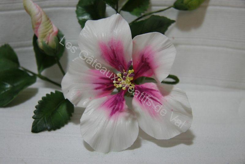 hibiscus 011