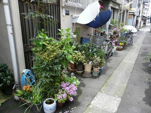 Canalblog Tokyo Tsukishima Plantes09