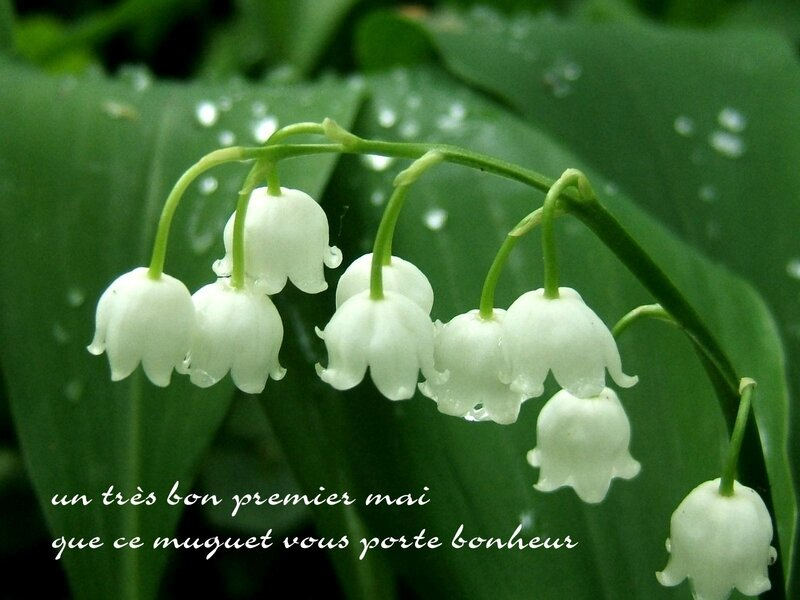 signification-muguet