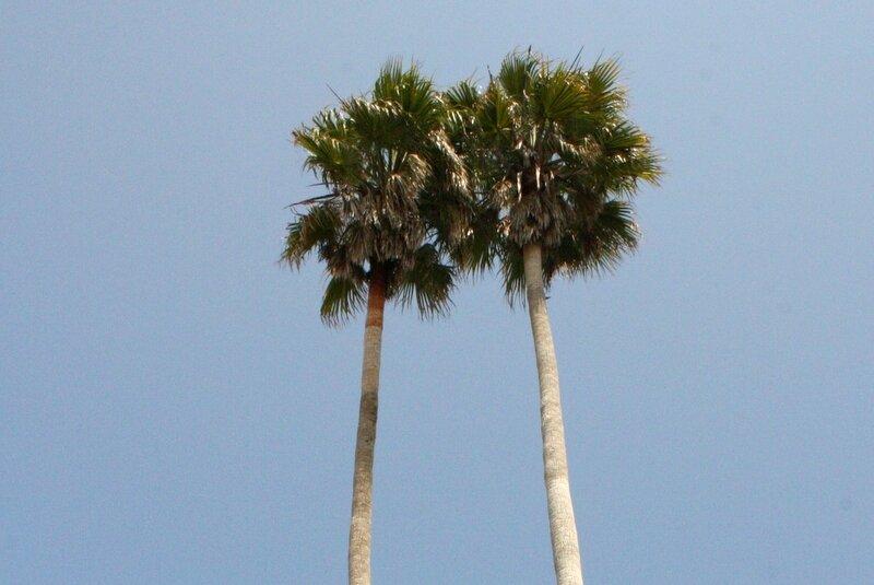 Californie 1 (128)