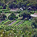 Tahiti Hiti - 02-Une ferme avec champs d'ananas