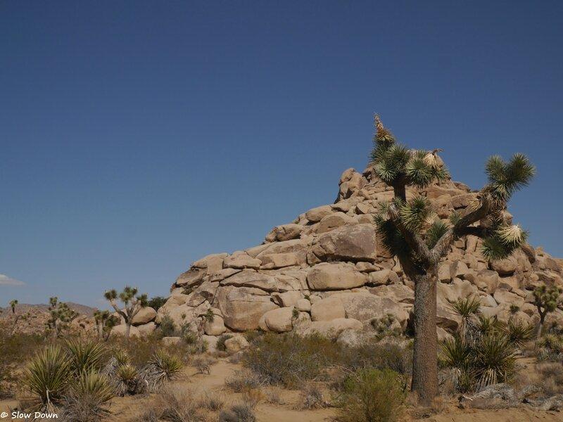 pierre et cactus