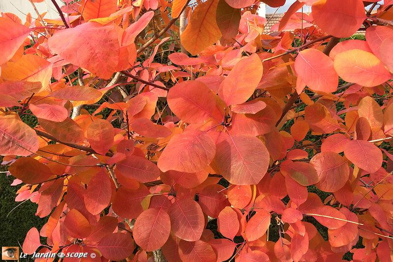 Couleurs-d'automne-5