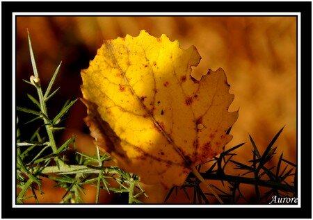 l_automne4