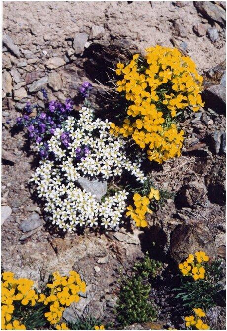 fleurs carlit (Copier)